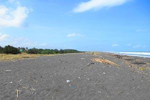 Thumbnail untuk artikel blog berjudul Berujung di Pantai Trisik
