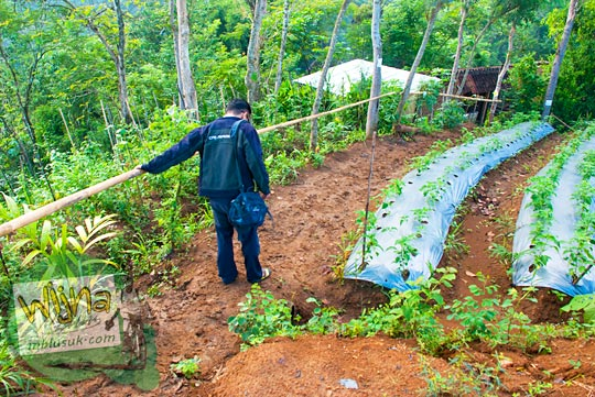 jalan tanah berlumpur yang dilalui pengunjung menuju puncak Bukit Kendil di Desa Giritengah, Borobudur