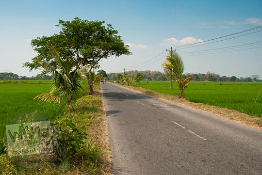 Pemandangan jalan yang diapit sawah-sawah di Desa Bogor, Klaten, Jawa Tengah pada September 2015