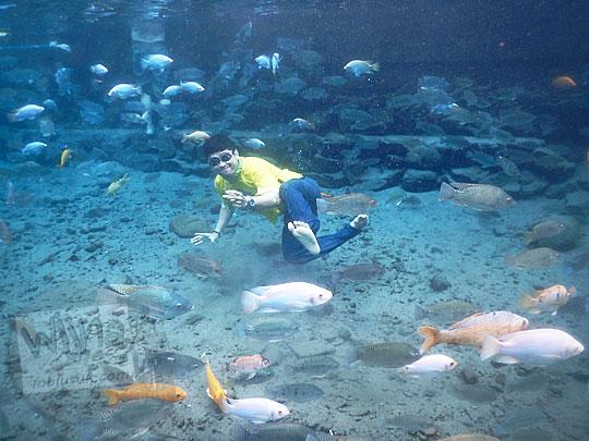Foto unik di dalam air bersama kumpulan ikan-ikan yang hidup di dalam Umbul Ponggok, Klaten, Jawa Tengah