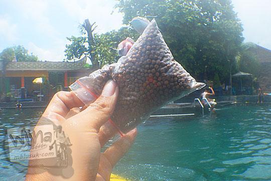 Harga pelet makanan ikan yang dijual di Umbul Ponggok, Klaten, Jawa Tengah