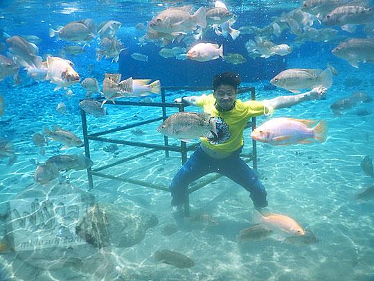 Lokasi hits di Umbul Ponggok, Klaten untuk berpose unik bersama kumpulan ikan-ikan yang beraneka macam