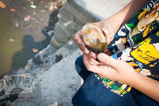 budidaya kerang air tawar di Sendang Tirto Sinongko, Ceper, Klaten pada kemarau panjang Oktober 2015