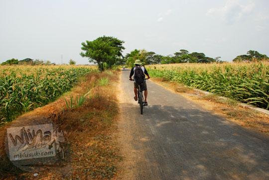 Rute Bersepeda melintasi ladang jagung ke Sendang Tirto Sinongko, Ceper, Klaten pada kemarau panjang Oktober 2015
