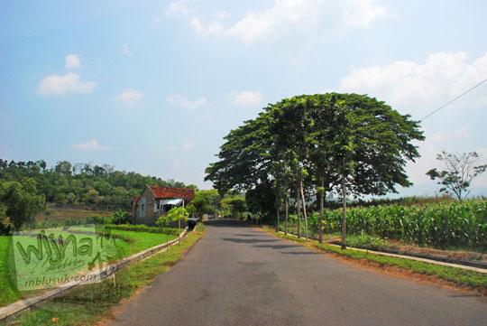 pemandangan suasana sawah desa pohon besar keramat dalam perjalanan menuju lokasi wisata Air Terjun Dolo, Besuki di Kediri pada September 2016