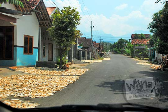 profil keuntungan usaha warga desa kediri yang merintis cara pembuatan gaplek enak dengan menjemur singkong di pinggir jalan raya desa menuju ke dasar Air Terjun Dolo pada September 2016