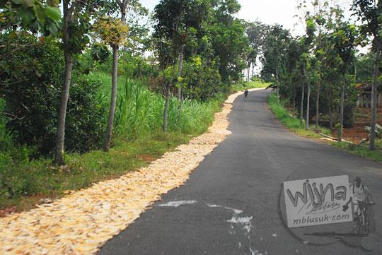 Warga desa di Kediri menjemur singkong di pinggir jalan raya untuk diolah jadi gaplek di sepanjang rute menuju lokasi wisata Air Terjun Dolo pada September 2016
