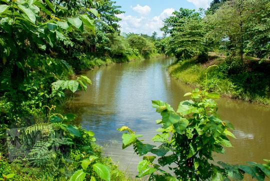 kondisi penampakan wujud pemandangan kanal tua di kompleks percandian muaro jambi yang digunakan sebagai sarana transportasi pada zaman kerajaan Sriwijaya pada tahun 2015
