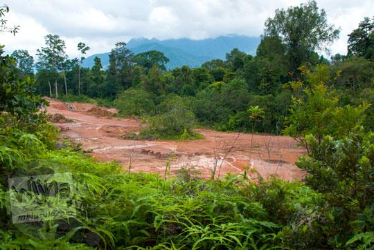 kasus perambahan ilegal hutan gundul di dekat lokasi situs sejarah Benteng Bukit Cening Lingga pada April 2016