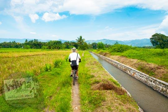 Bersepeda menyusuri Selokan Van Der Wijck ke arah hulu dari pinggir sawah, Yogyakarta di tahun 2016