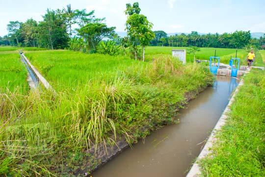 Petani di kecamatan Minggir, Yogyakarta cemburu perbedaan air irigasi sawah di tahun 2016