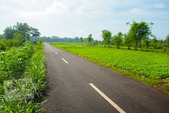 pemandangan hamparan ladang kacang tanah di ruas jalan desa pelosok Yogyakarta siang hari sepi dan banyak begal dari Playen ke Karangmojo, Gunungkidul pada April 2016