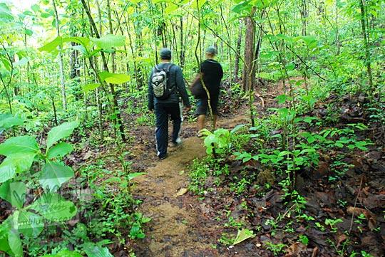 Rute jalan kaki masuk hutan ke Air Terjun Surupethek, Pleret, Bantul di tahun 2015