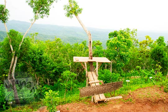 spot foto selfie pohon di obyek wisata Canting mas Puncak Dipowono, Hargowilis, Kokap, Kulon Progo pada Januari 2016