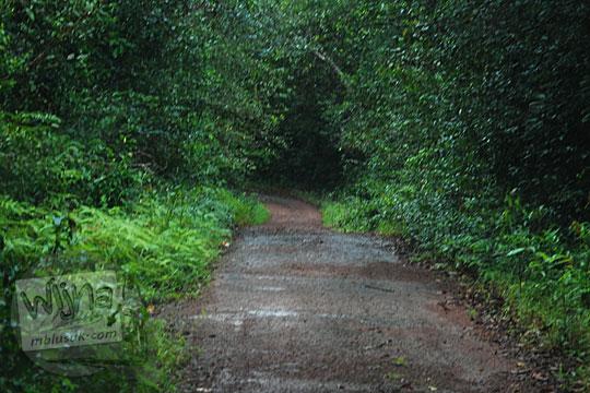 penampakan suasana wujud kondisi medan jalan aspal dikelilingi hutan menuju obyek wisata air terjun gurok beraye belitung tanpa dilengkapi papan petunjuk arah lampu penerangan rambu marka
