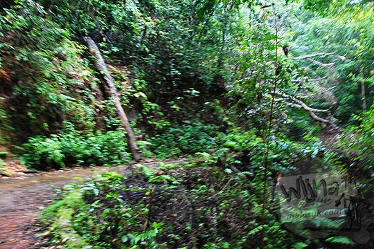 di musim hujan banyak pohon besar tumbang melintangi jalan aspal dikelilingi hutan mendaki gunung menuju kawasan wisata alam air terjun gurok beraye belitung sehingga akses wisatawan tertutup