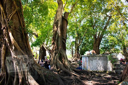 mitos kisah misteri pohon besar di umbul manten tulung klaten tempat tinggal hantu setan dhemit penculik pengantin muda baru