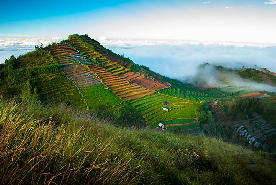 pemandangan bukit dengan ladang kentang berundak-undak terasering latar belakang kabut dan awan yang difoto dari puncak Bukit Sikunir Dieng