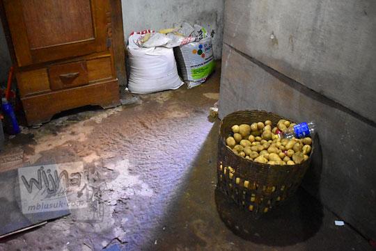 foto suasana bagian belakang rumah petani kentang yang merangkap sebagai homestay di Desa Sembungan Kejajar Wonosobo Jawa Tengah