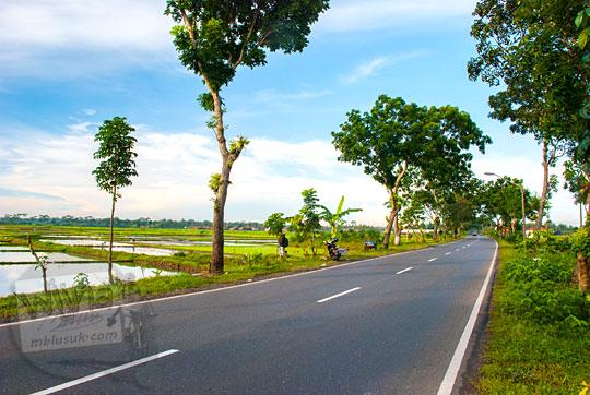 pemandangan pagi di sekitar jalan ringroad kebumen