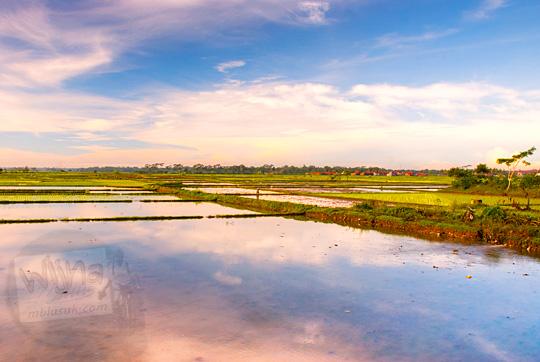 refleksi warna langit memantul di sawah tergenang air saat pagi hari di kebumen