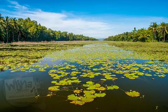 pemandangan indah danau rawa genangan air penuh bunga teratai lokasi selfie dekat pantai petanahan