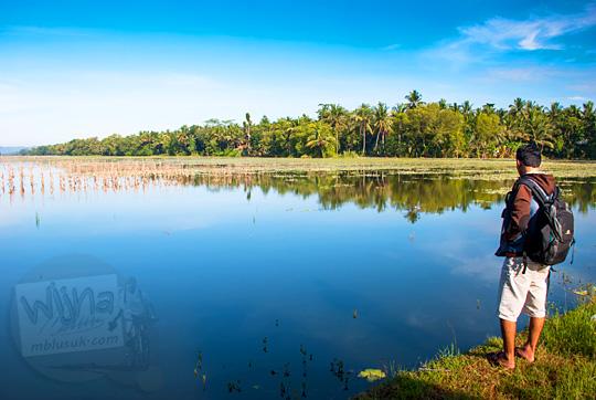 seringnya genangan air sawah banjir menyebabkan tanah dijual murah di sekitar pantai petanahan kebumen