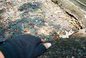 Thumbnail untuk artikel blog berjudul Terima Kasih dan Sampai Jumpa