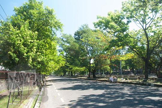 foto suasana teduh pohon rindang di jalan teknika selatan ugm tanpa filter cpl(w) athabasca