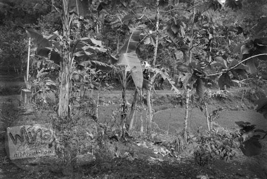 cerita seks ngentot selingkuh di semak-semak desa sekeliling kebun pisang