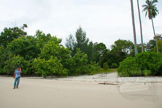 hutan bakau di dekat pantai pasir panjang di pulau lingga kepulauan riau