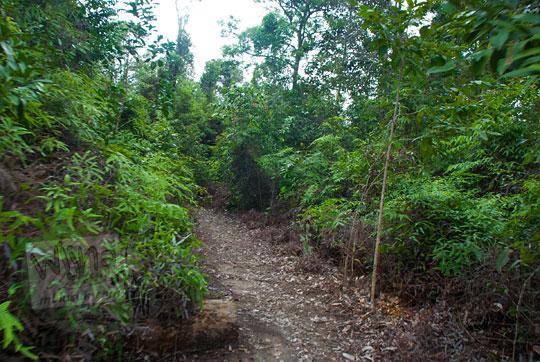 kondisi medan jalan hutan menuju Pantai Moyang di Pulau Lingga Kepulauan Riau mobil tidak bisa masuk