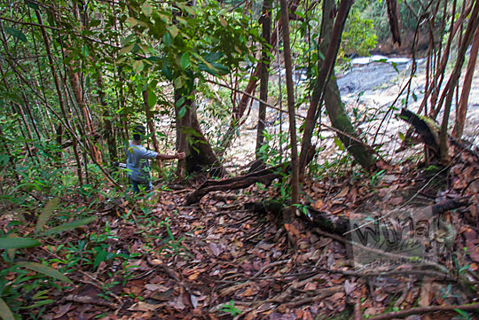 jalan setapak menyusuri hutan ke puncak air terjun resun lingga di kepulauan riau