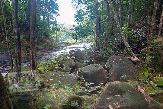 jalan hutan ke air terjun resun lingga di kepulauan riau yang lokasinya masih tersembunyi