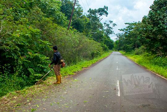 foto suasana aktivitas kegiatan pengerjaan proyek pemotongan rumput pinggir jalan raya di pulau lingga kepulauan riau