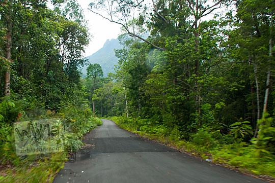 angkutan umum melewati jalan aspal menembus hutan ke arah air terjun resun lingga di kepulauan riau