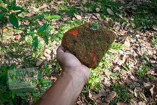 penemuan pecahan batu bata kuno di kebun karet dekat Kompleks Candi Muara Takus Riau