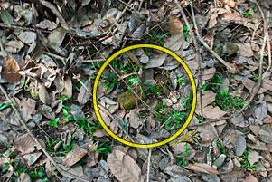 Thumbnail untuk artikel blog berjudul Berburu Peninggalan Purbakala di Sekitar Candi Muara Takus