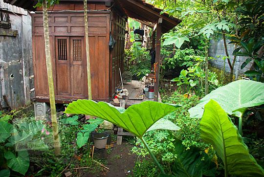 gubuk kayu joglo dikelilingi tumbuhan lebat dan semak di daerah gedongkuning selatan yogyakarta
