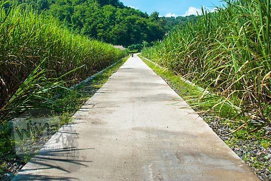 jalan ladang tebu dekat candi banyunibo yang tembus ke tebing breksi