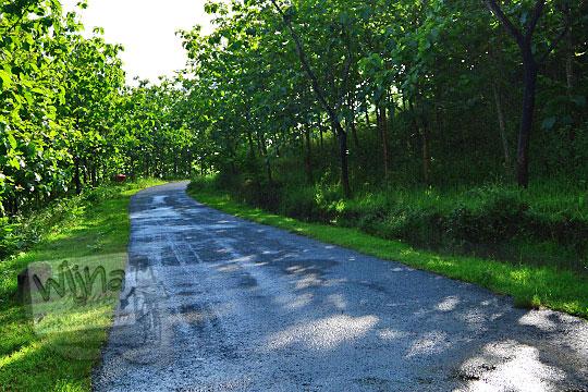 rute jalan hutan jati ke Bukit Turunan di Girisuko Panggang Gunungkidul Yogyakarta pada zaman dulu Desember 2017