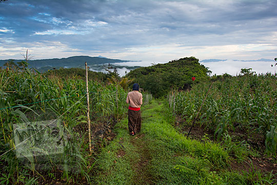 cewek berjilbab jalan kaki menuju ke Bukit Turunan di Girisuko Panggang Gunungkidul Yogyakarta pada zaman dulu Desember 2017