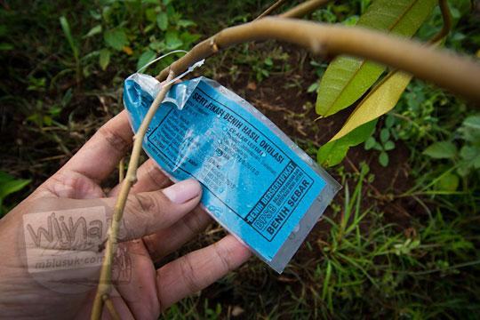 label sertifikat benih okulasi pohon durian di kawasan Bukit Turunan di Girisuko Panggang Gunungkidul Yogyakarta pada Desember 2017