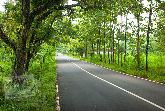 suasana pohon rindang di sepanjang jalan raya karangmojo semin di gunungkidul yogyakarta