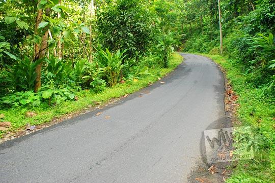 tanjakan kanan kiri hutan jalur cinomati penghubung desa terong dan desa wonolelo di bantul