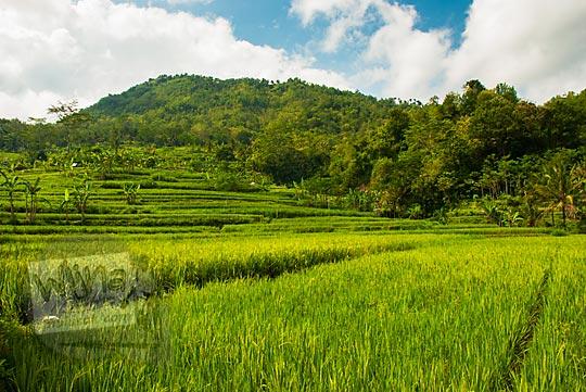 foto pemandangan indah sawah terasering di yogyakarta di desa ngalang gedangsari gunungkidul