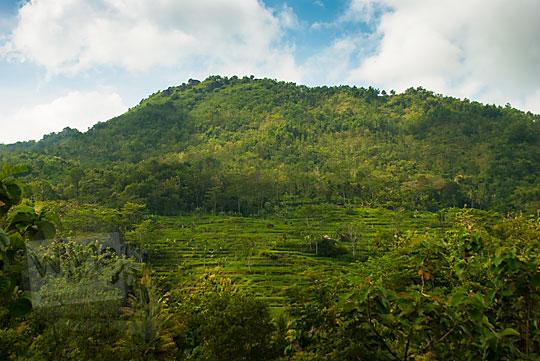 foto pemandangan indah sawah hijau dikeliling bukit di yogyakarta di desa ngalang gedangsari gunungkidul