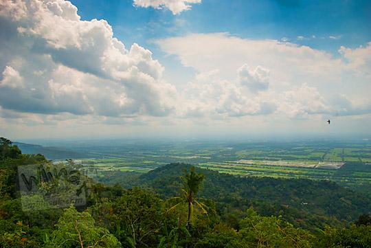 pemandangan indah hamparan sawah desa klaten jawa tengah dari pinggir jalan menuju green village gedangsari gunungkidul