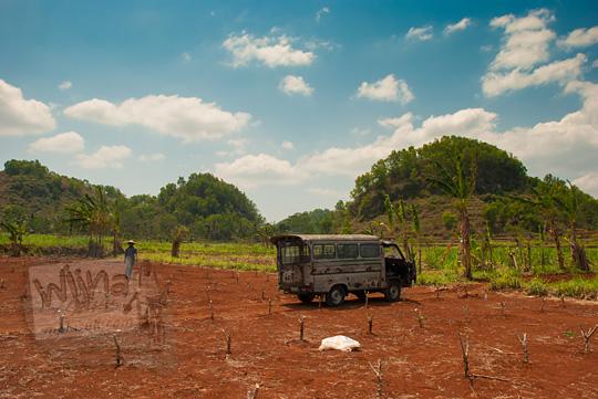 pemandangan ladang singkong kering ada mobil angkut tua dan pak petani yang baru dipanen di samping rest area bedoyo dengan latar bukit gamping khas ponjong gunungkidul