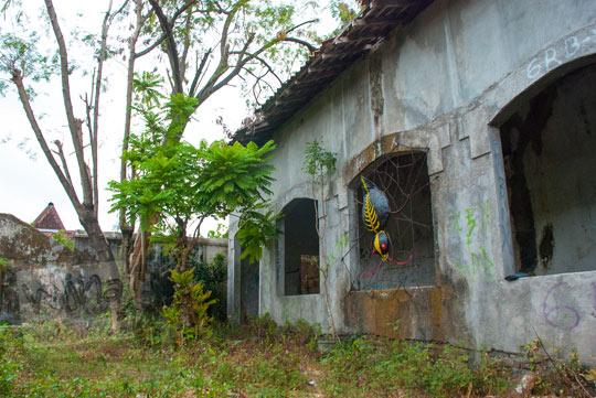 kondisi suasana halaman belakang rumah pocong di banguntapan kotagede yogyakarta yang tidak terawat ditumbuhi rumput liar dan semak ada pohon petai cina angker tinggi besar juga karya seni laba-laba hitam raksasa
